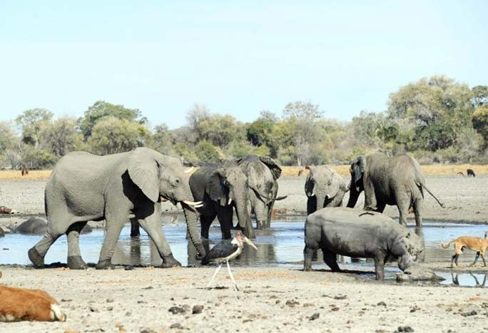 Botswana reports mysterious deaths of 356 elephants
