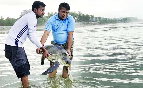 160 turtles caught in plastic waste rescued from Bangladesh beach