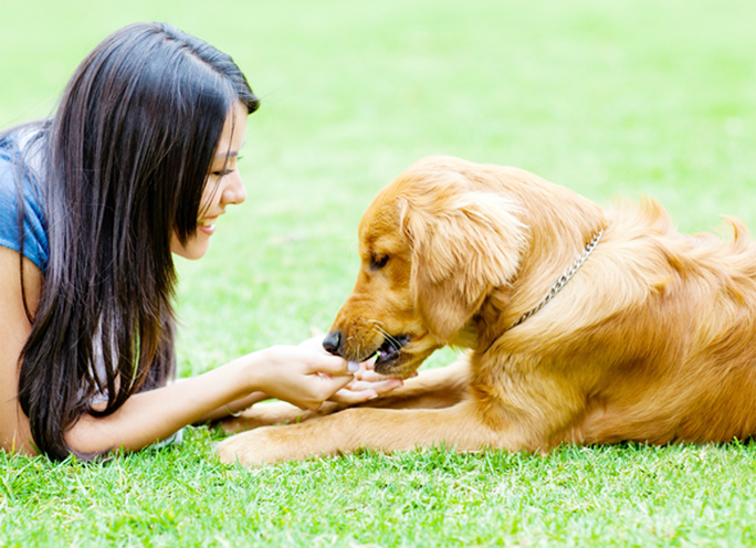 How Pets May Improve Our Immunity