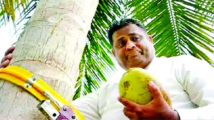 Sri Lankan minister climbs tree to address public on shortage of coconuts
