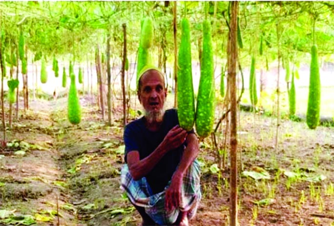 Kishoreganj farmers busy in cultivating early winter vegetables
