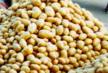 New potato sold at Tk 150 per kg in city's markets