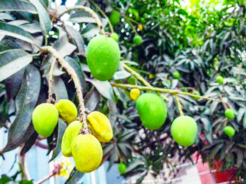 Hot weather hits life, livelihood in Rajshahi