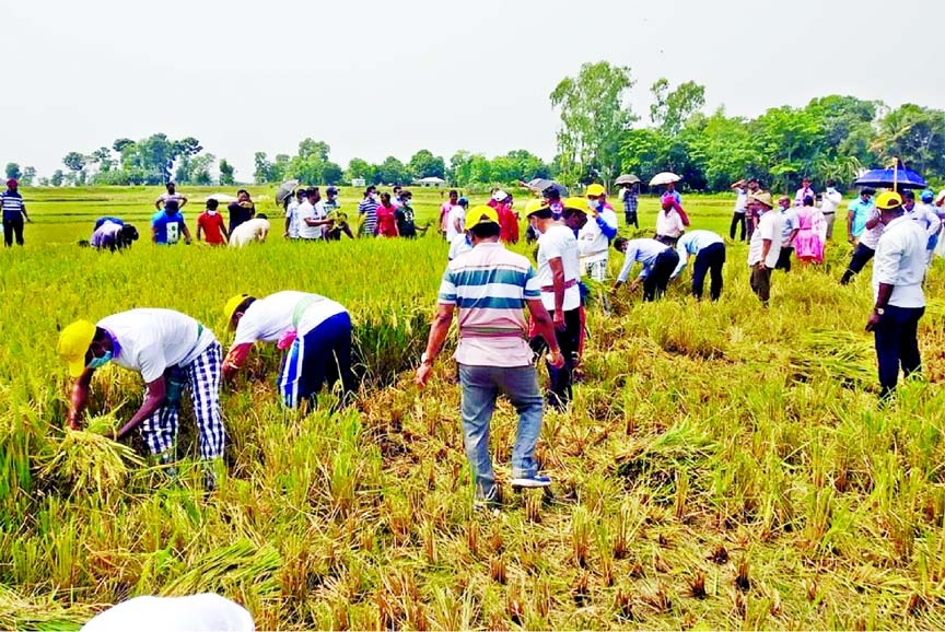 Paddy harvesting in haor areas progressing well