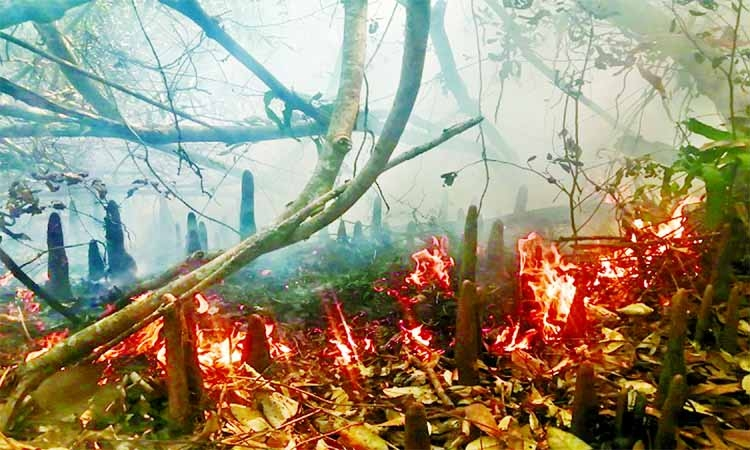 Sundarban fire proving difficult to douse