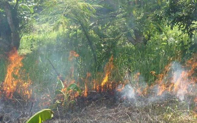 Sundarbans fire finally under control; probe body formed