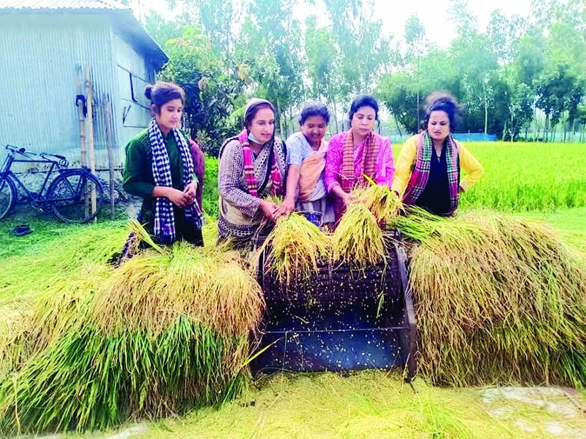 Activists of Bangladesh Mohila Jubo League, Rangpur Unit help farmers cut the paddy as ongoing Covid restrictions created huge labour shortage in the district that hinders farmers to process their yields. This photo was taken from the field on Monday.