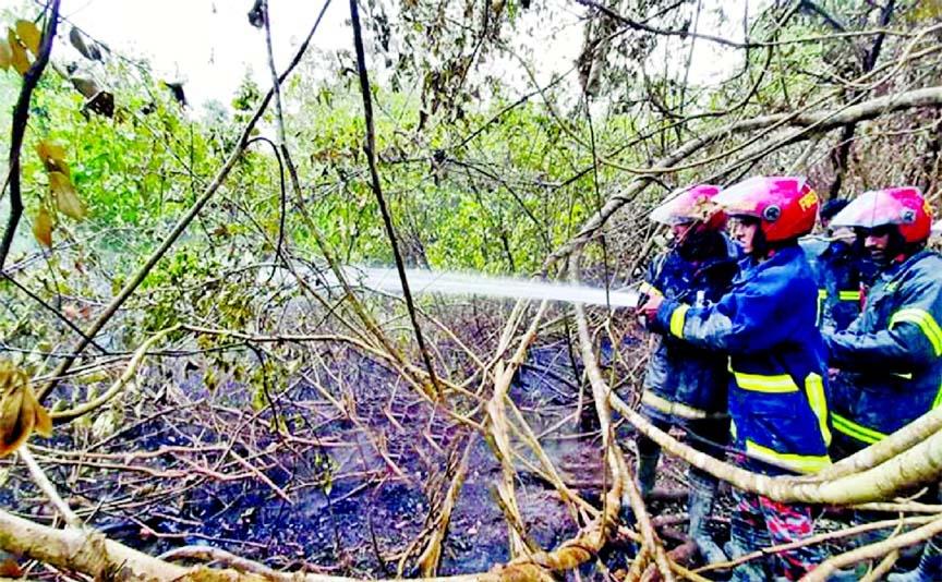 Five acres of Sundarbans burnt Fire under control; probe body formed