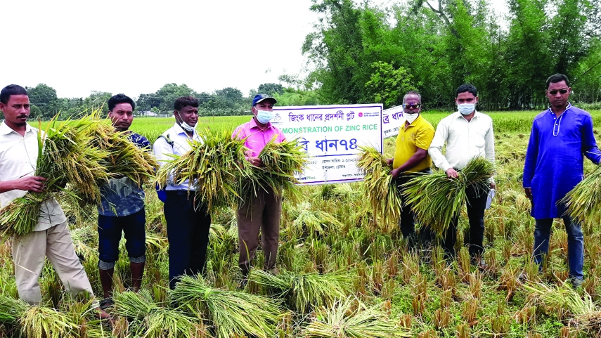 Field Day on Biofortified Zinc Paddy