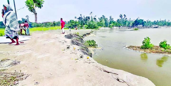 House holds, paddy fields devoured by Teesta River erosion at Ulipur Upazila in Kurigram district on Thursday.