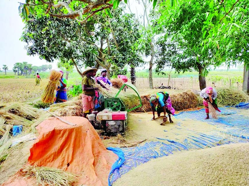 Record 35.63 lakh tons Boro rice produced in Rajshahi division