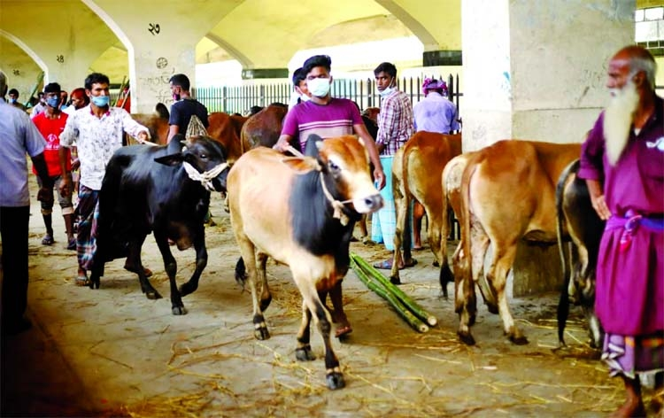 Special cattle train with 803 cows reaches Dhaka