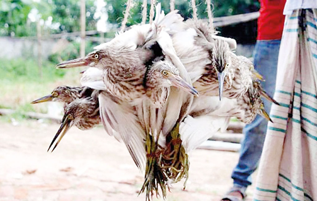 How do our actions affect the birds of Bangladesh
