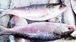 BD allows export of 2080 tonnes of hilsa to India