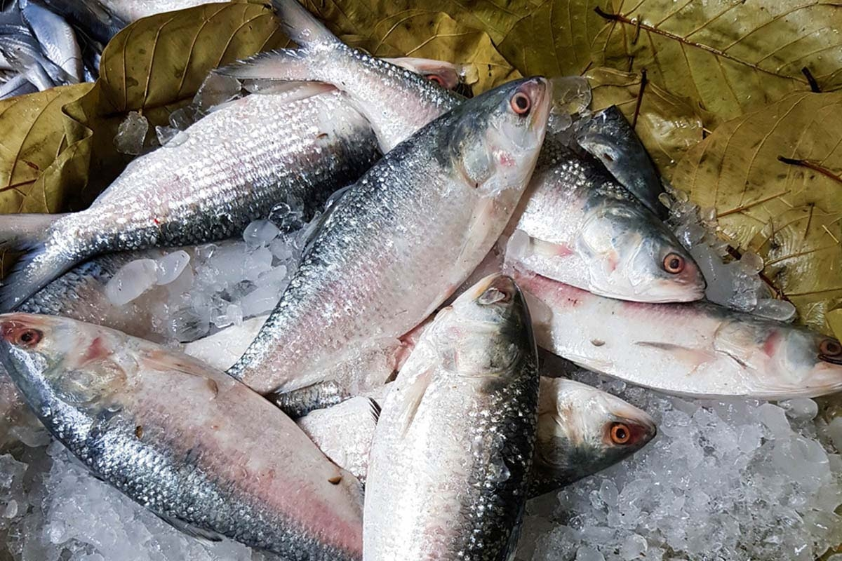 No ban on Hilsa netting from Monday midnight